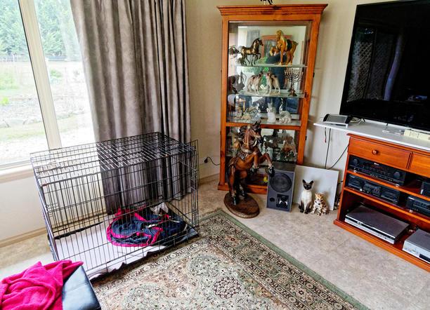 Dog-cage-2.jpeg