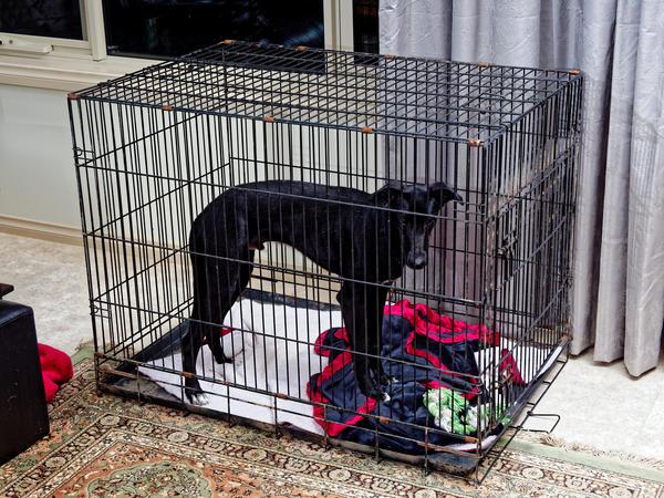 Dog-cage-3.jpeg