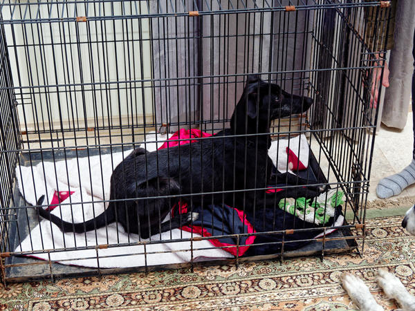 Dog-cage-5.jpeg