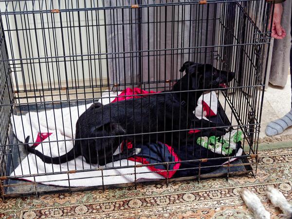 Dog-cage-7.jpeg