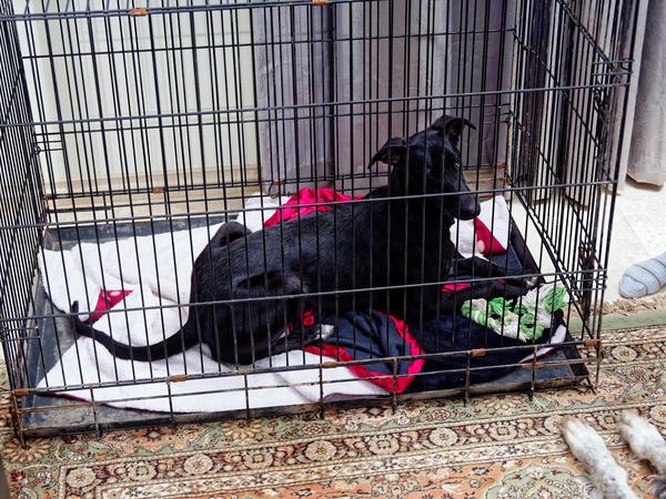 Dog-cage-8.jpeg
