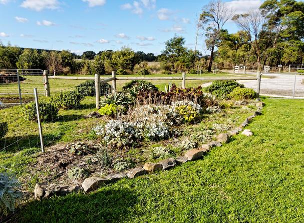 Succulent-garden.jpeg