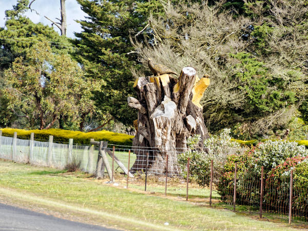 Tree-carving-1.jpeg