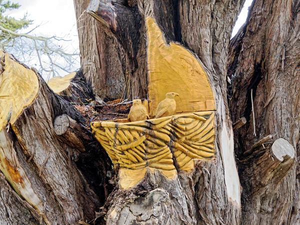 Tree-carving-11.jpeg