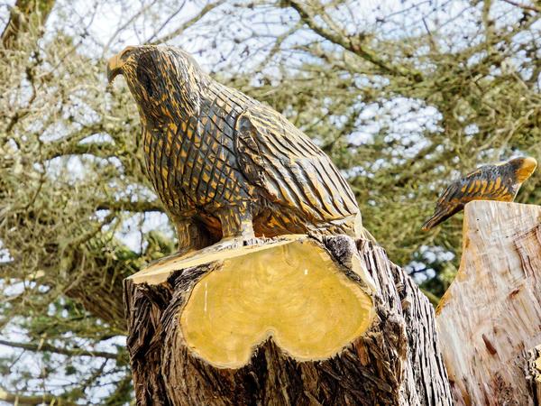 Tree-carving-14.jpeg