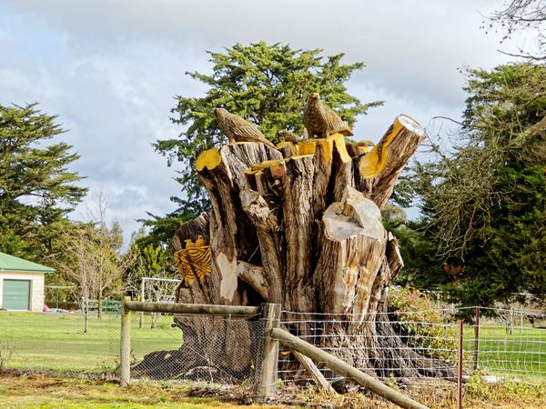 Tree-carving-2.jpeg