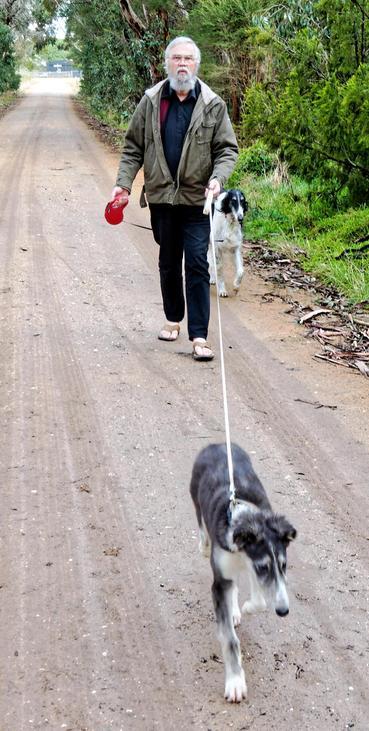 Walking-dogs-9-detail.jpeg