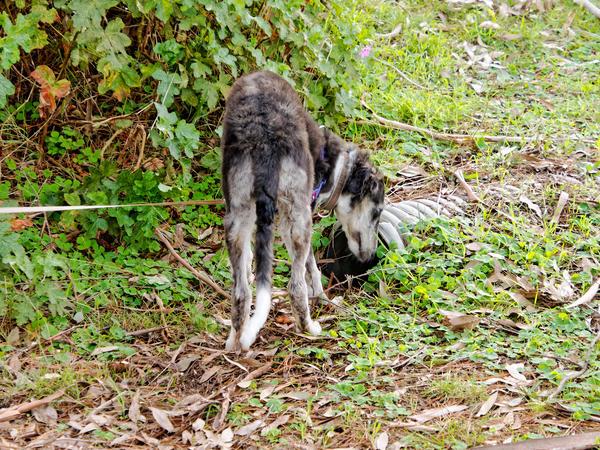 Walking-dogs-2.jpeg