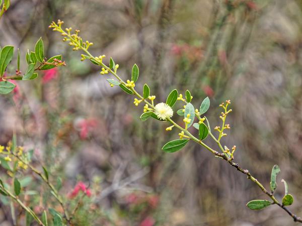 Mystery-flower-2-2.jpeg