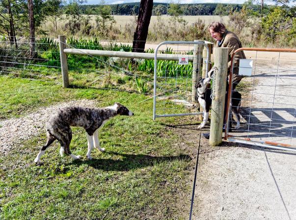 Walking-dogs-7.jpeg