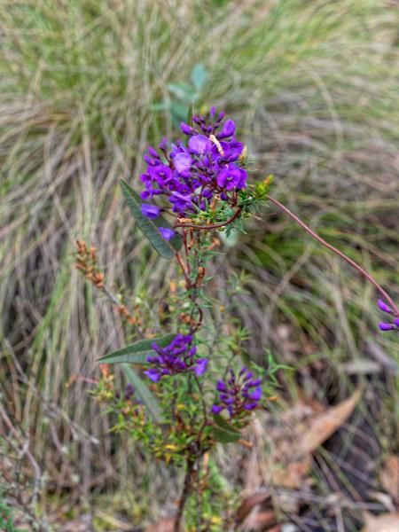 Wildflower-6.jpeg