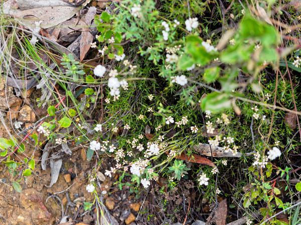 Wildflower-8.jpeg