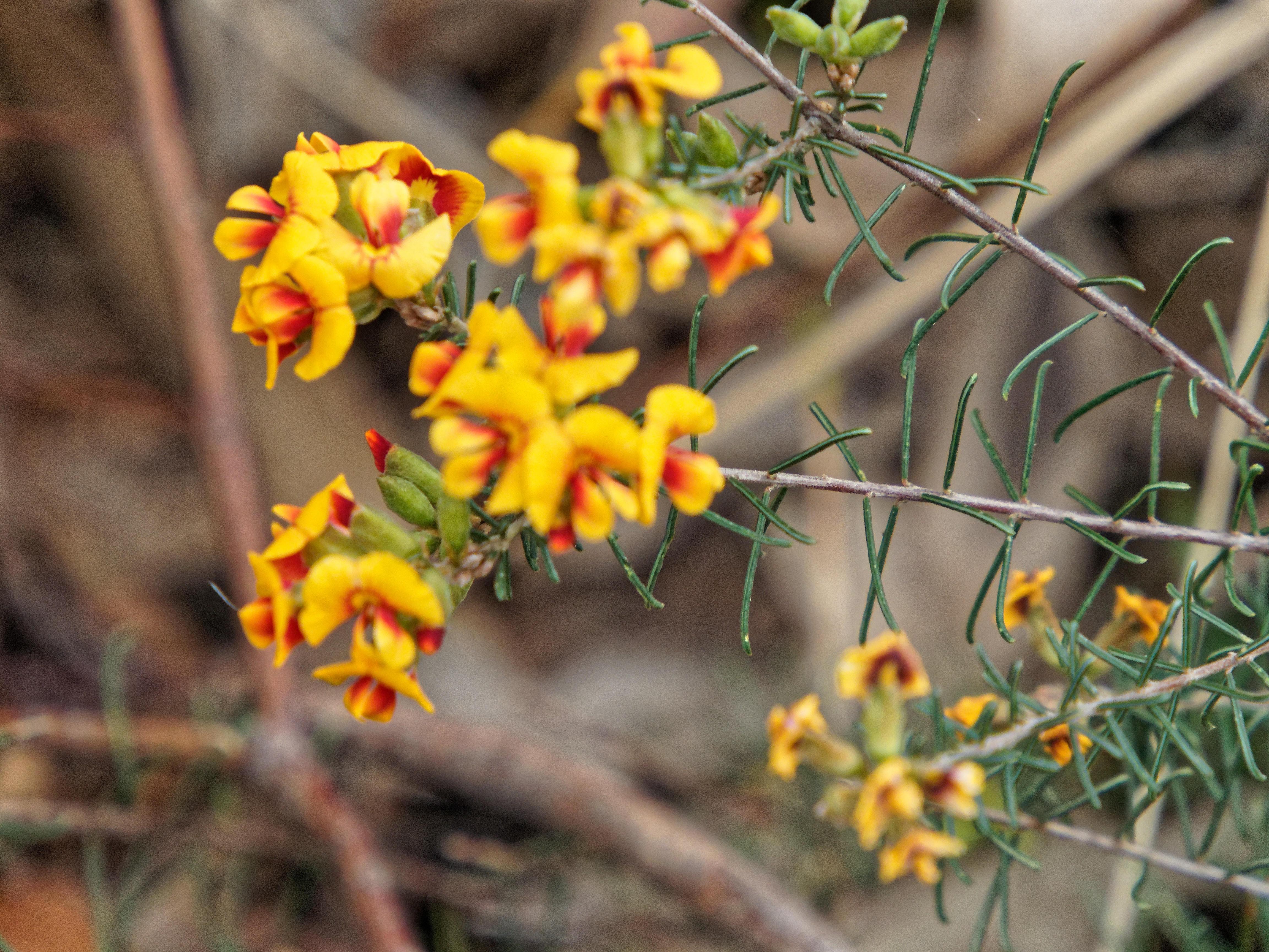 Wildflowers-2.jpeg