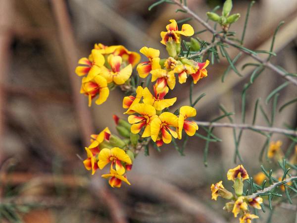 Wildflowers-4.jpeg
