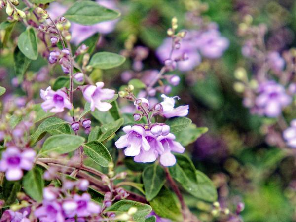 Wildflower-2.jpeg
