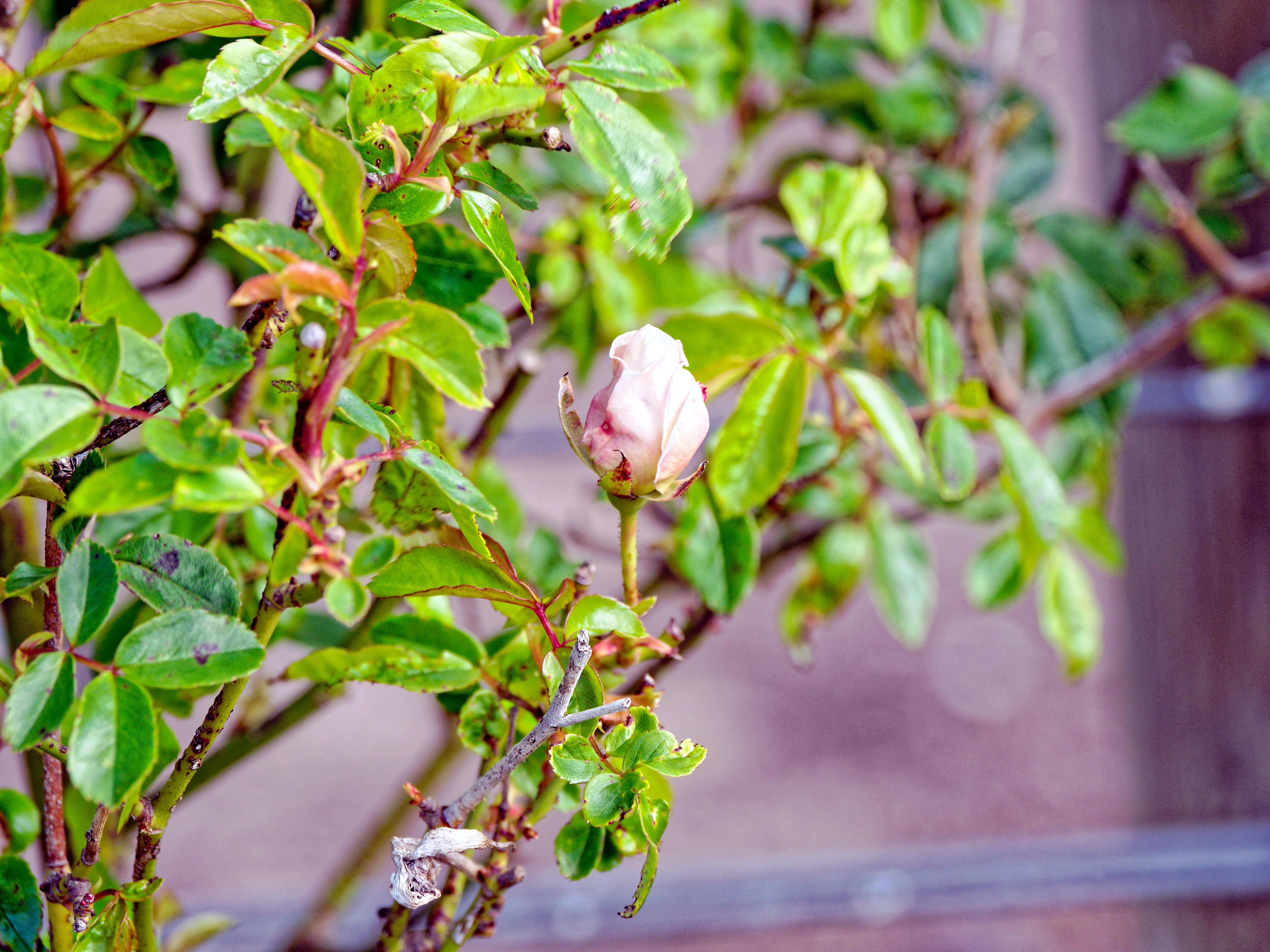 Rose-garden-3.jpeg
