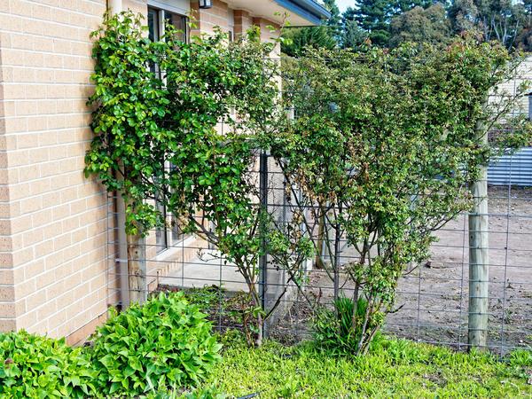 Rose-garden-2.jpeg