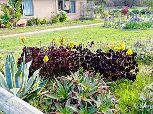 Succulents-1.jpeg