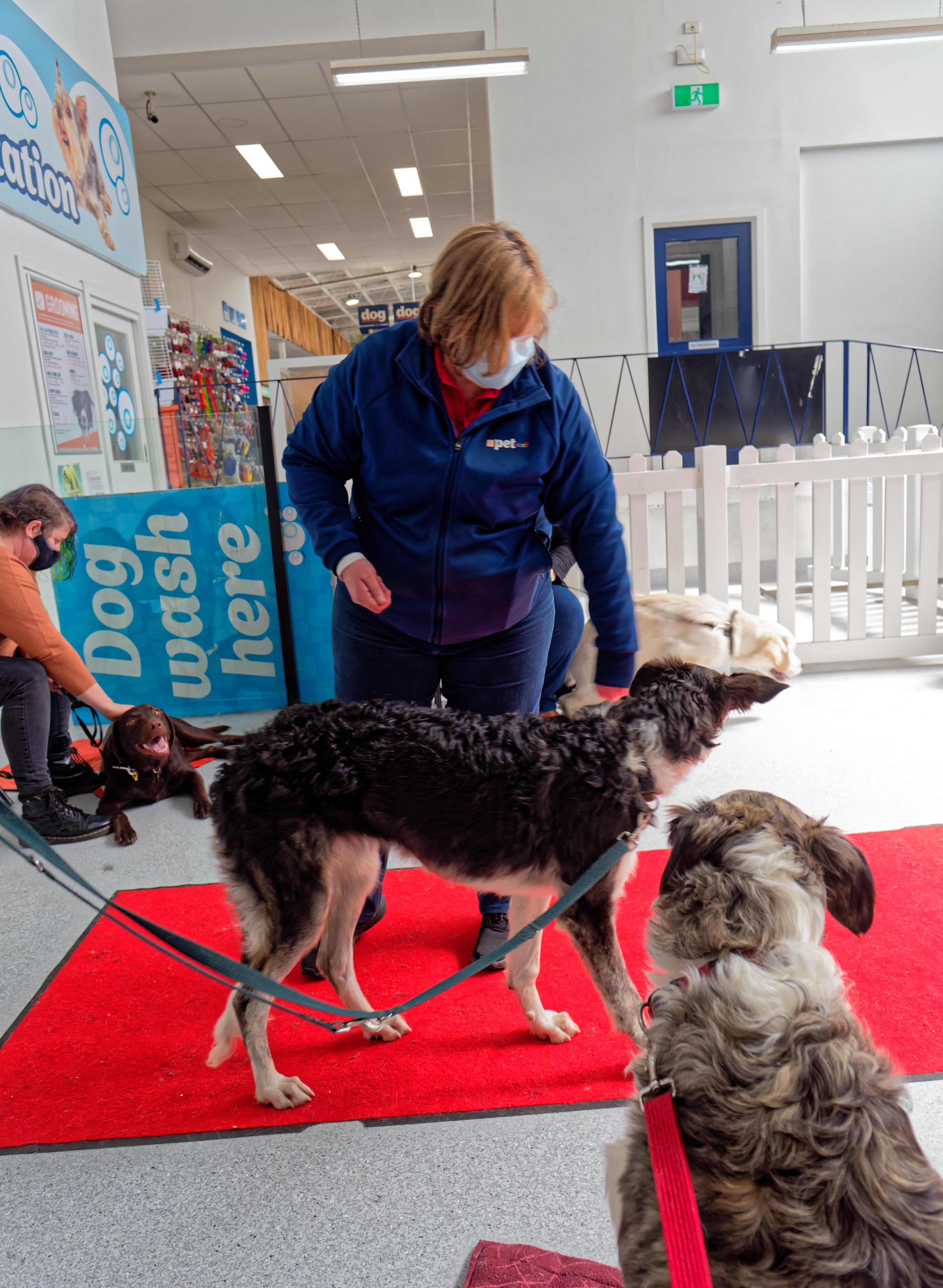 Dog-training-35.jpeg