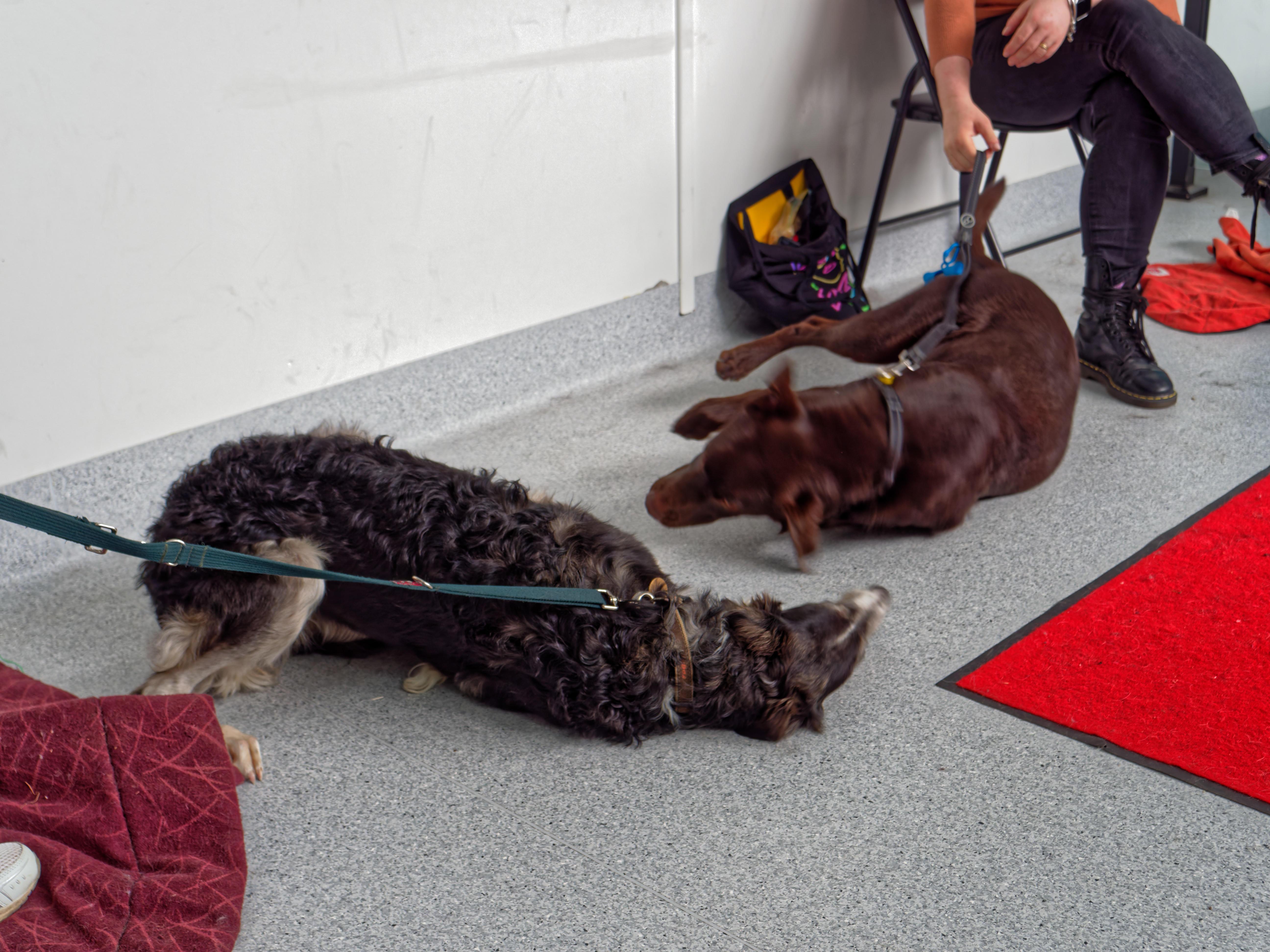 Dog-training-54.jpeg