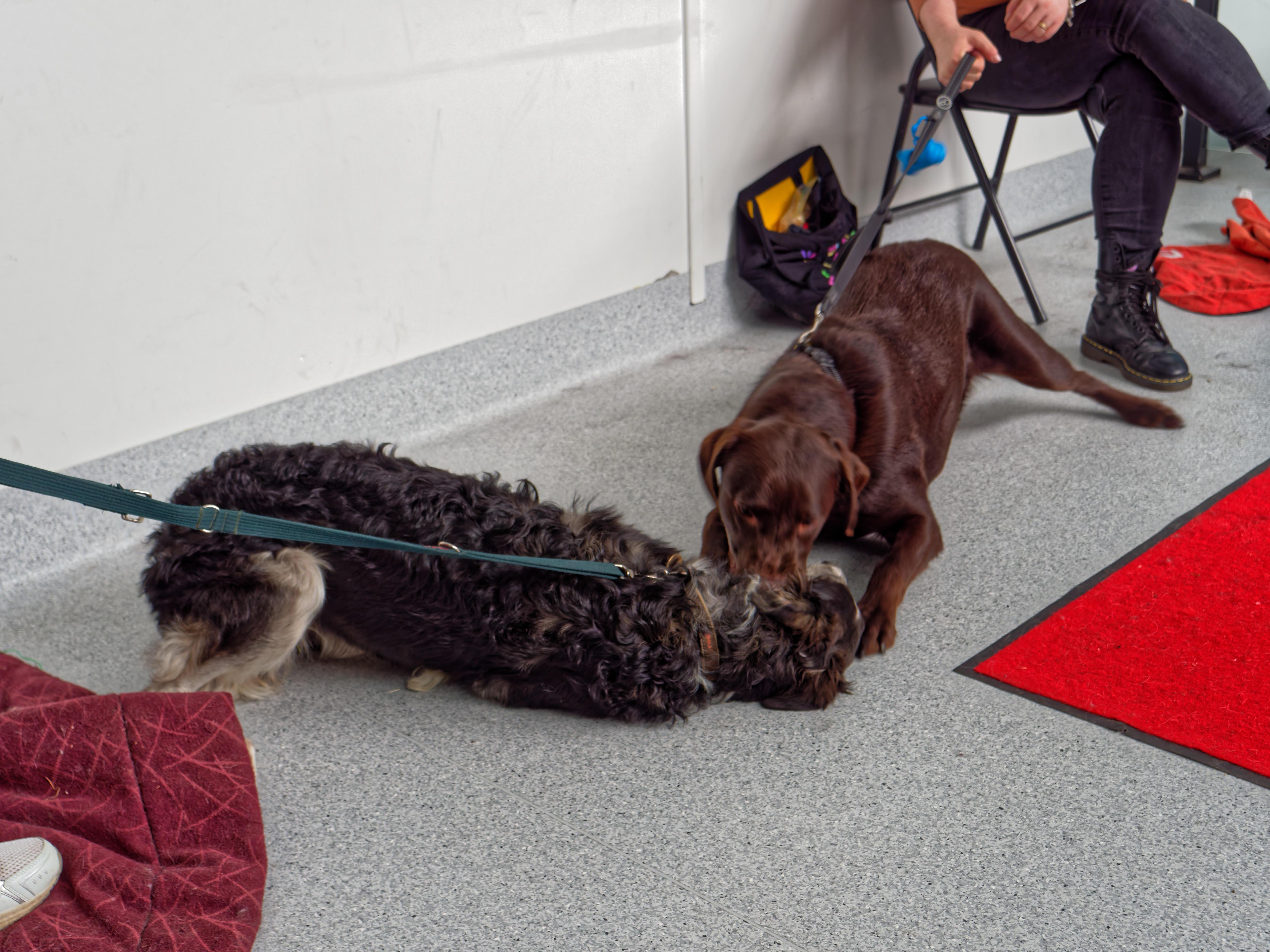 Dog-training-55.jpeg
