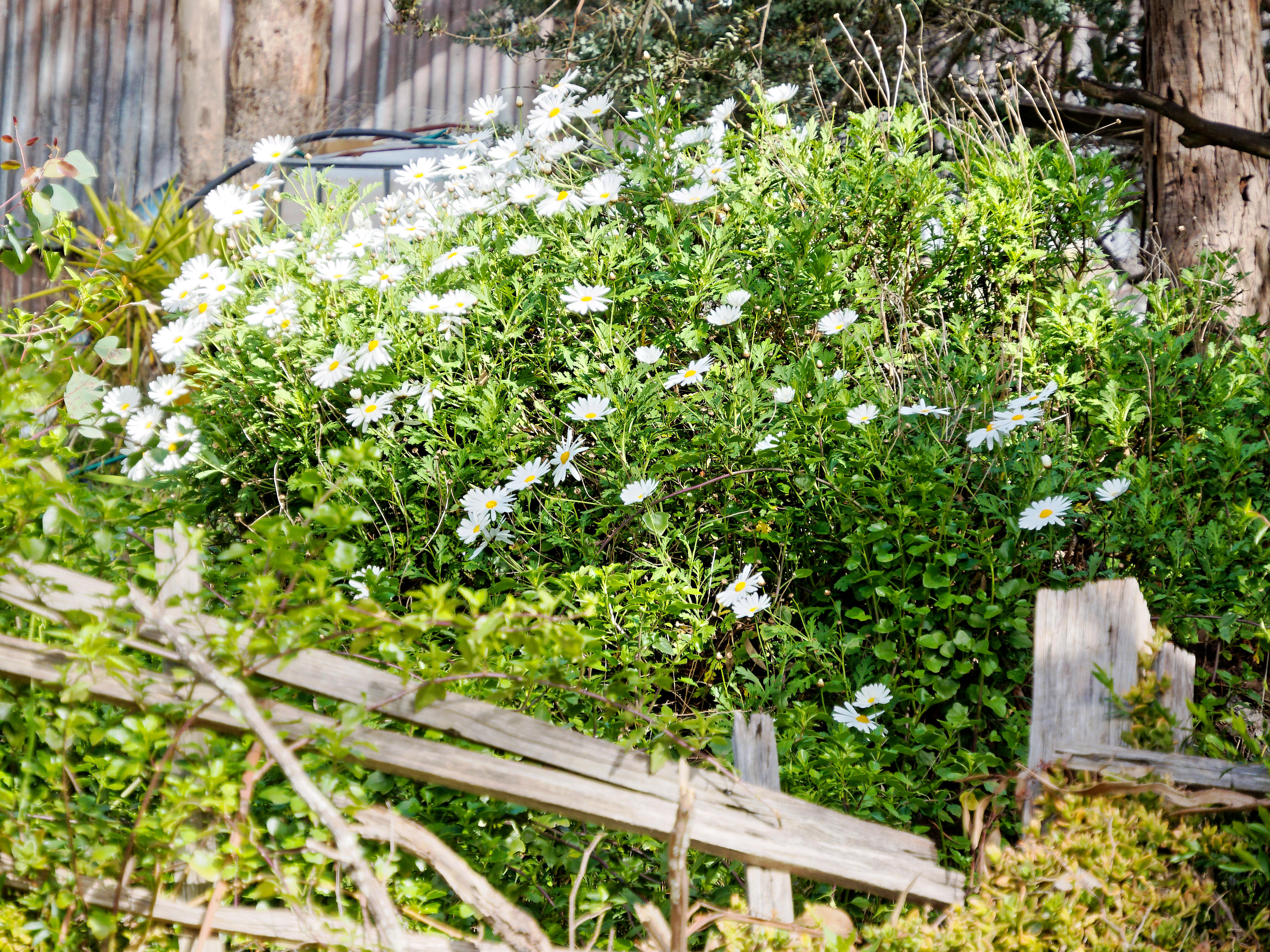 Spring-flowers-2.jpeg