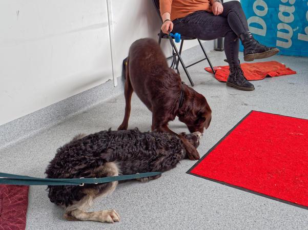Dog-training-39.jpeg
