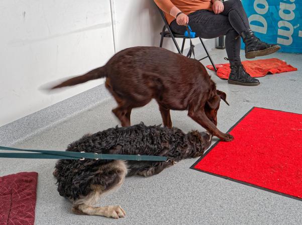 Dog-training-40.jpeg