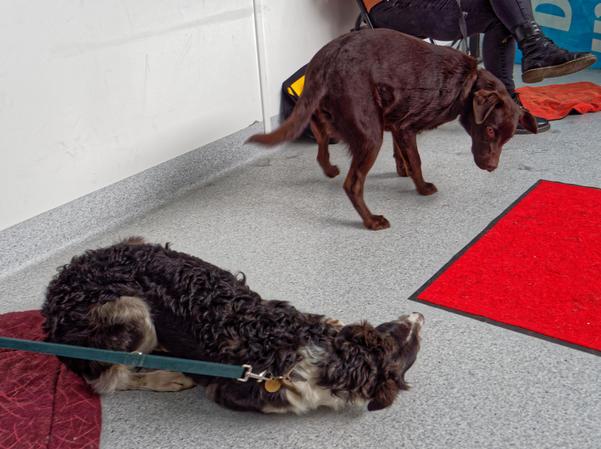 Dog-training-41.jpeg