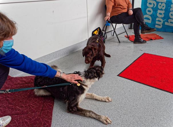 Dog-training-43.jpeg