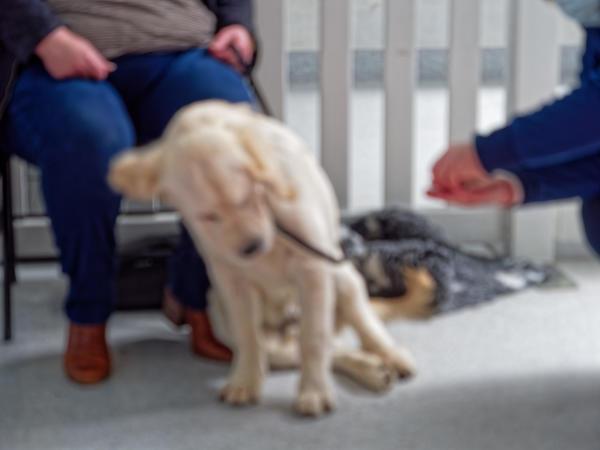 Dog-training-44.jpeg