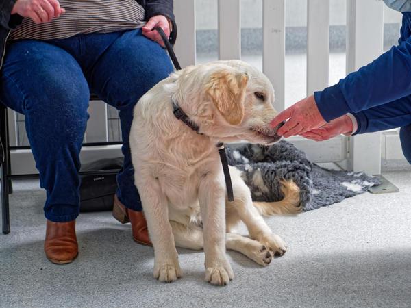 Dog-training-45.jpeg