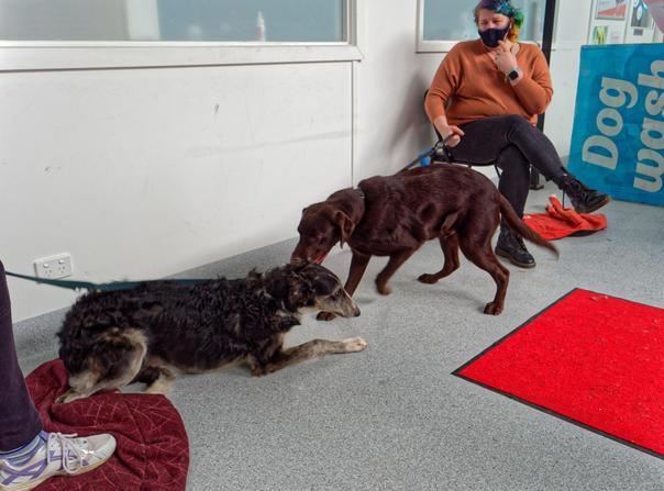 Dog-training-52.jpeg