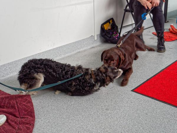 Dog-training-56.jpeg