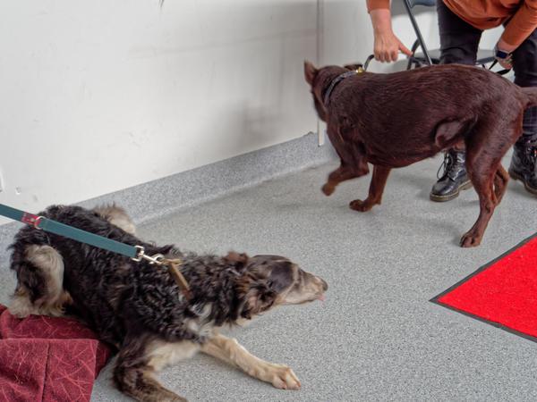 Dog-training-58.jpeg