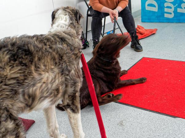 Dog-training-60.jpeg