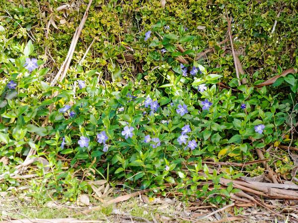 Spring-flowers-3.jpeg