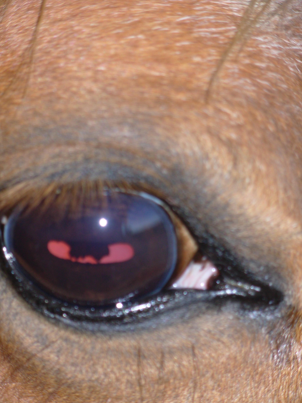 darah-eye1.jpeg