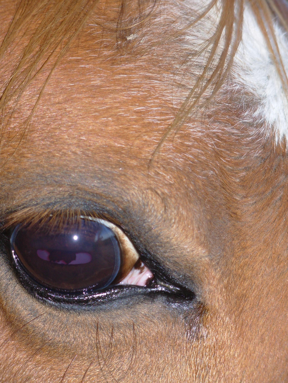 darah-eye2.jpeg