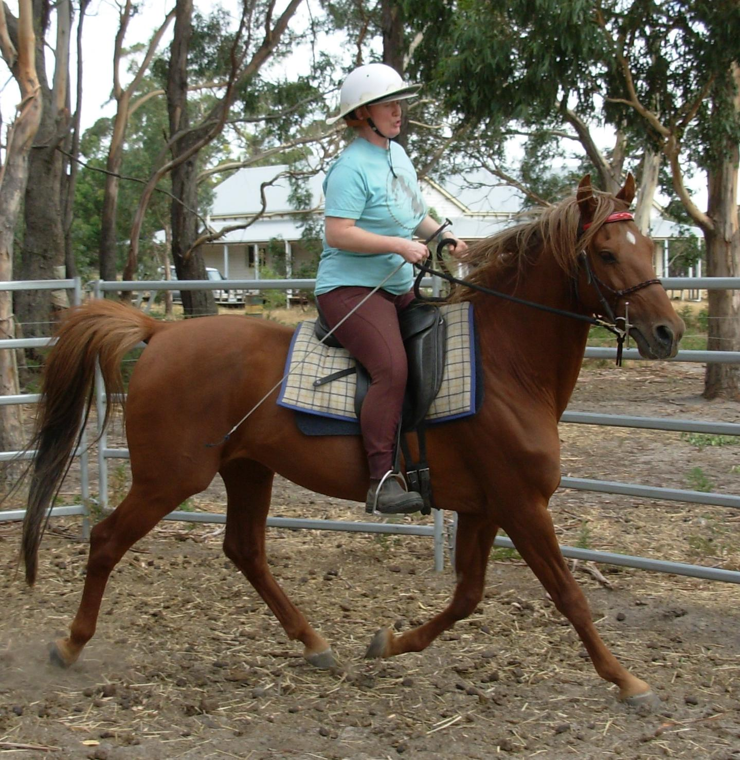 Saddlebred-trot.jpeg