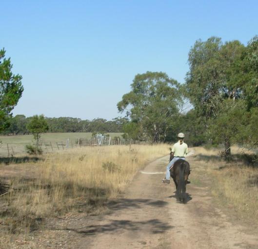 towards-the-cattleyards.jpeg