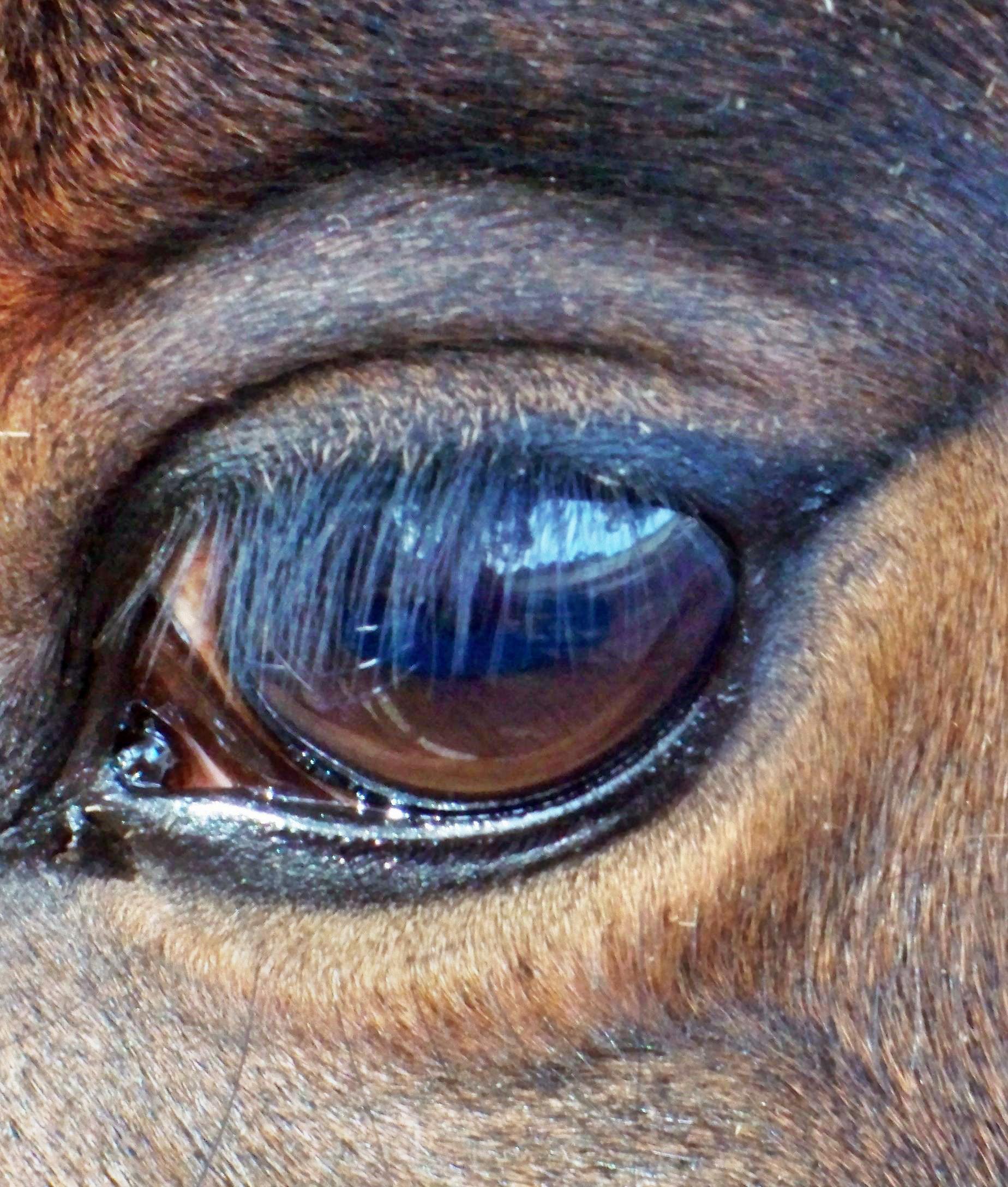 Benitos-eye-3.jpeg