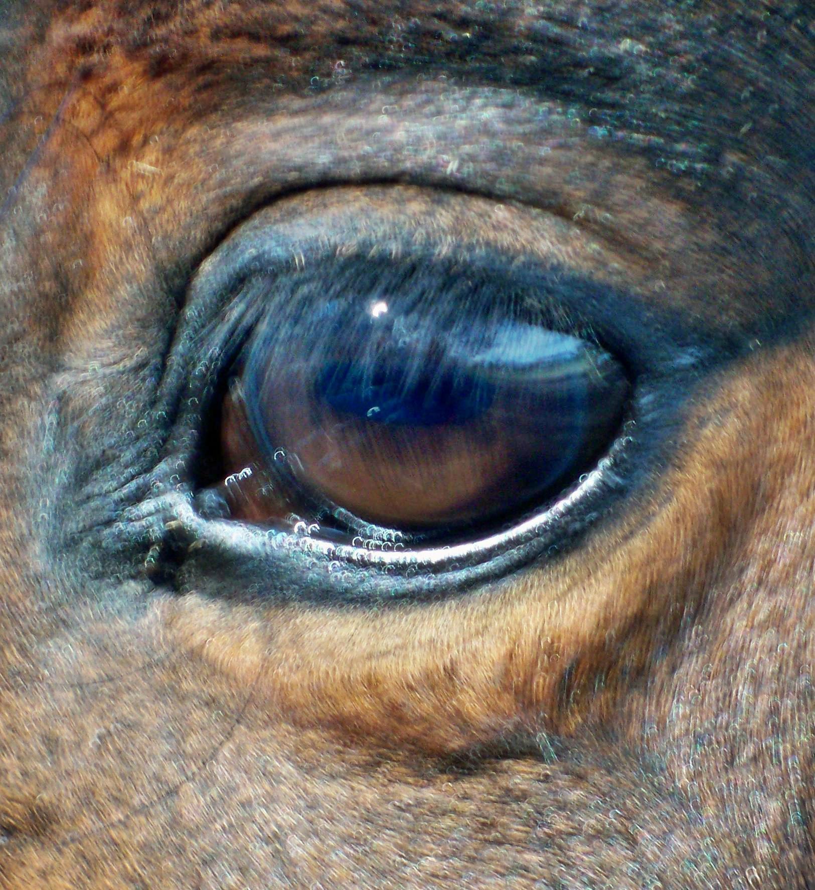 Benitos-eye-5.jpeg