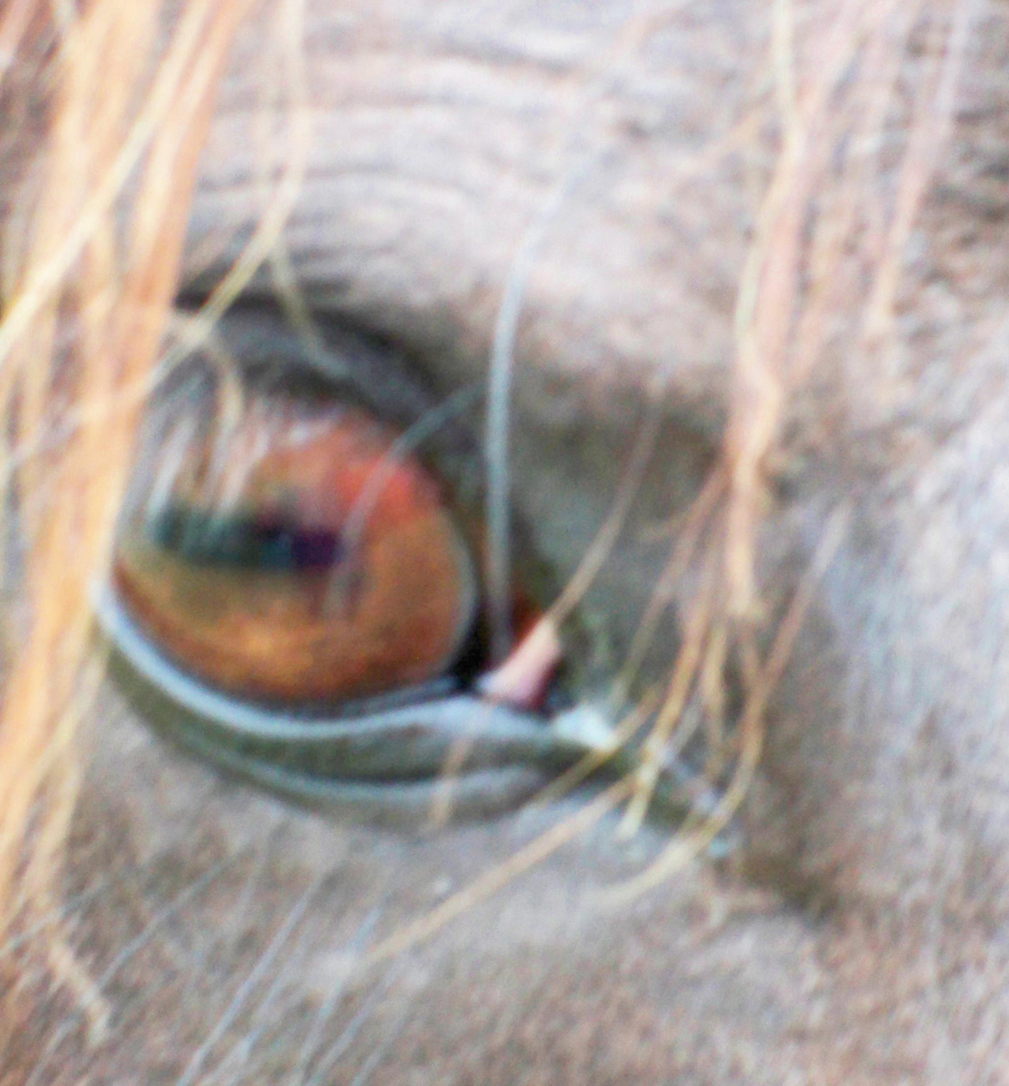 Zaras-eye-2.jpeg