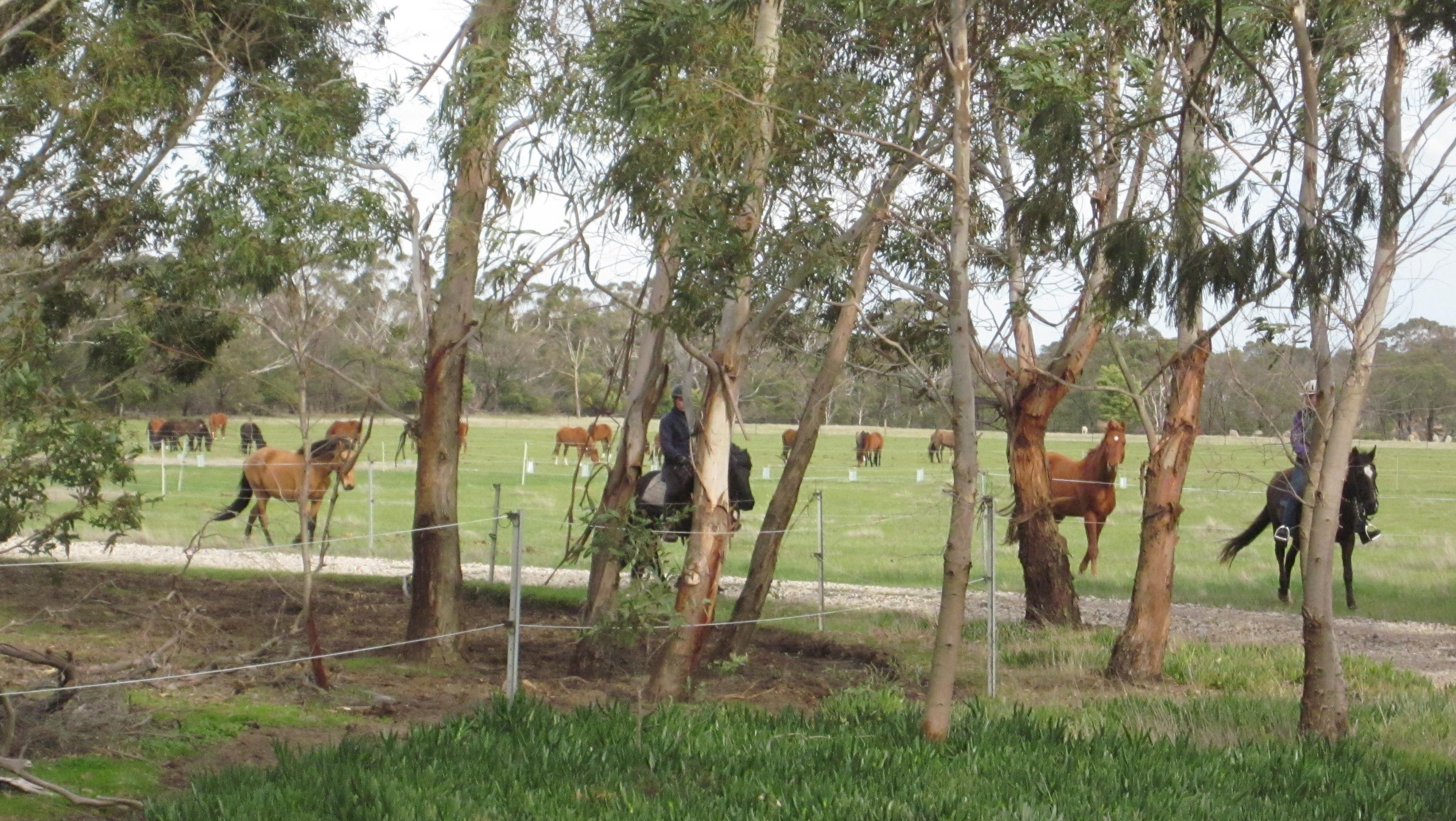 past-stallions.jpeg