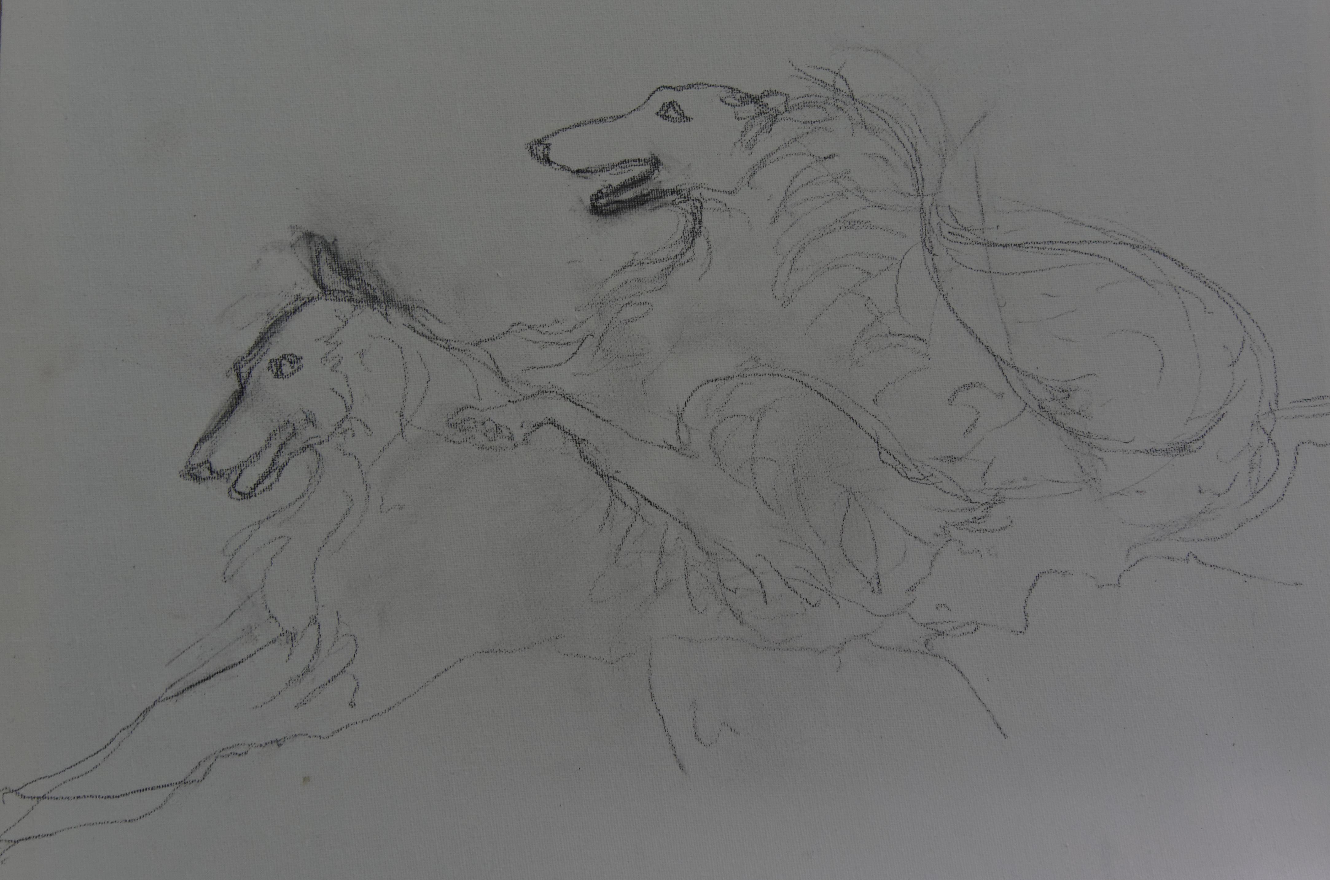 drawing-borzoi-2.jpeg
