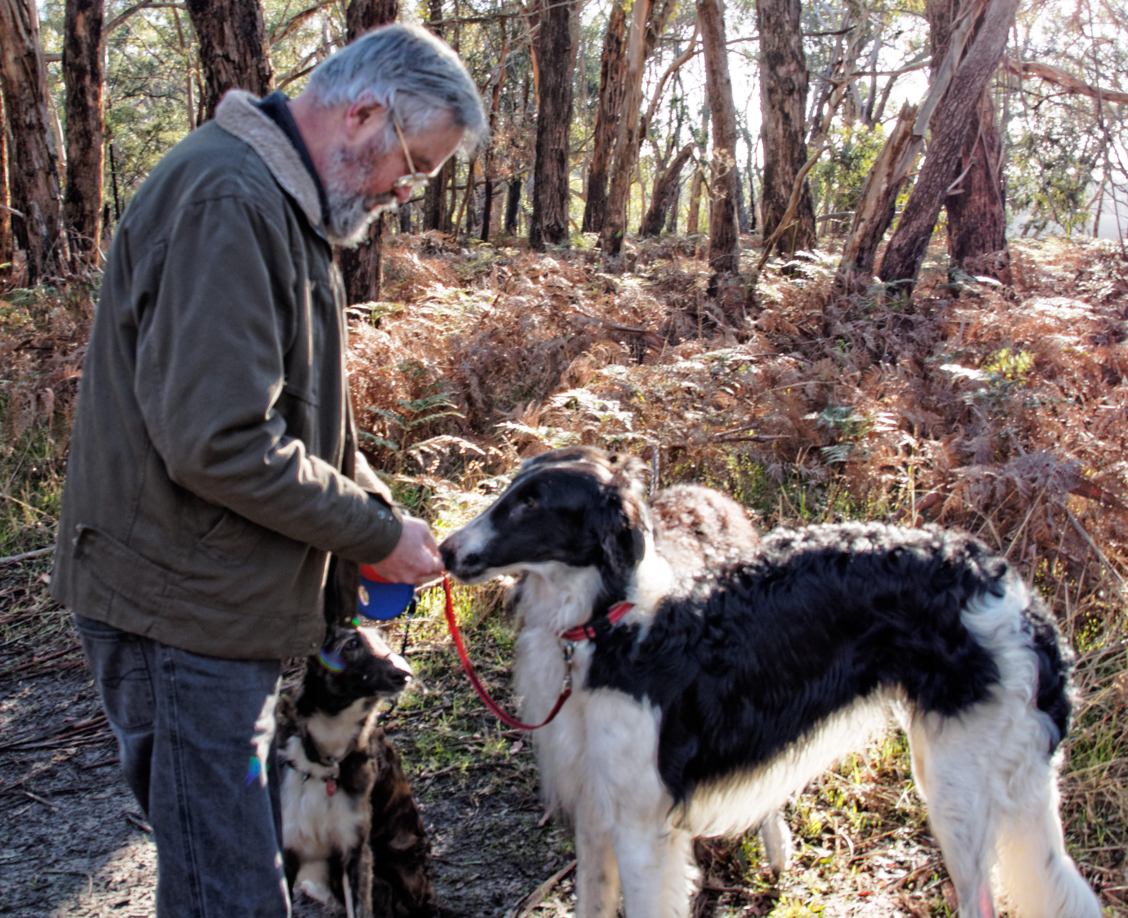Greg-and-dogs-10.jpeg