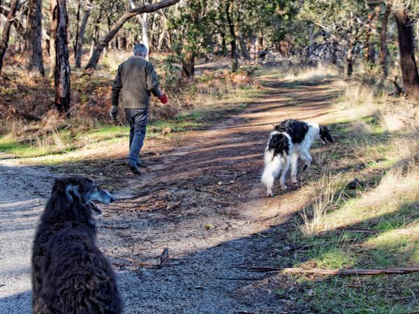 Greg-and-dogs-9.jpeg
