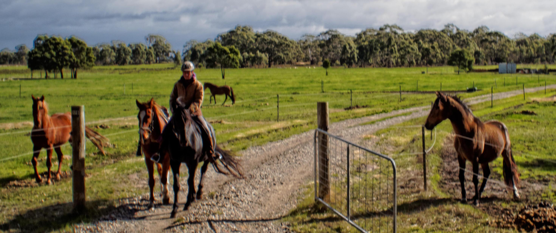 past-stallions-1.jpeg