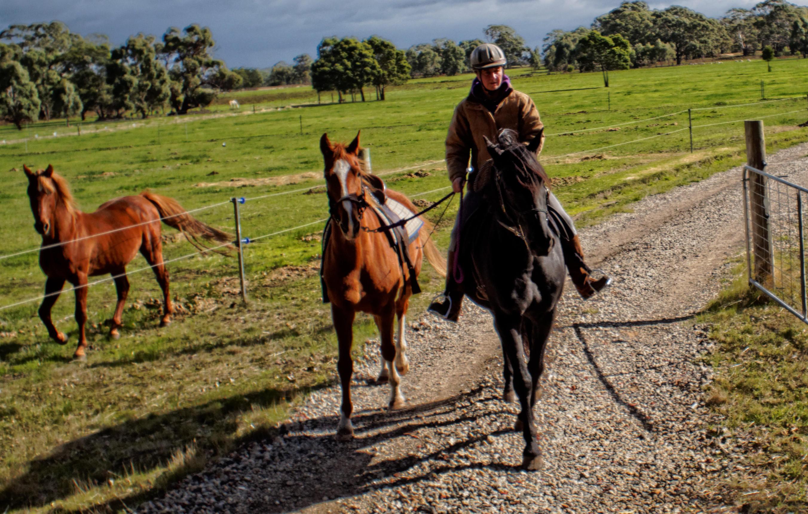past-stallions-4.jpeg